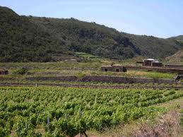 <strong>Castelvetrano</strong>. Assegnato al Comune un terreno confiscato alla mafia