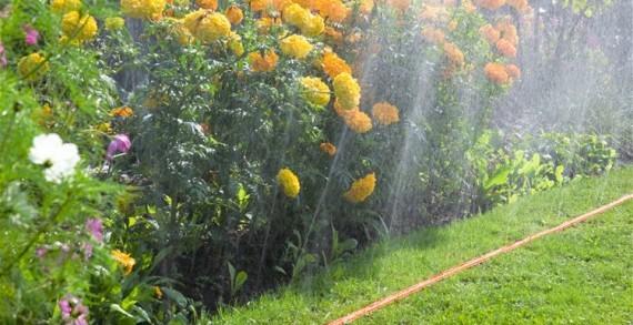 <strong>Irrigazione</strong>. Tecniche d&#8217;irrigazione, bisogna tenere ben presente che ogni specie ha delle proprie necessità