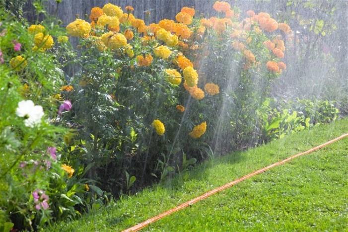 <strong>Irrigazione</strong>. Tecniche d'irrigazione, bisogna tenere ben presente che ogni specie ha delle proprie necessità