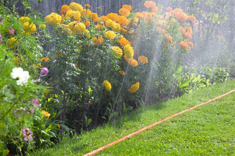 Agricoltura tecniche irrigazione fioriere idrocultura for Tecniche di irrigazione