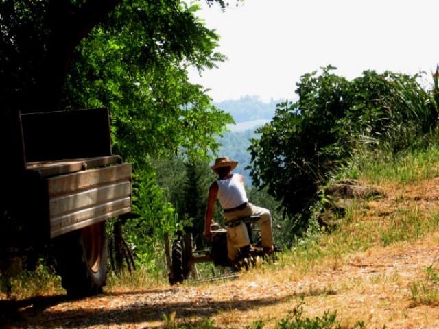 """<strong>Rapporto Svimez</strong>. L'agricoltura potrà salvare il """"povero"""" Sud"""