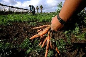 sicilia_economia_agricoltura_progetti_studenti