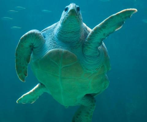 WWF: nate oltre 60 tartarughe marine in Sicilia!