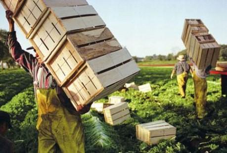 <strong>L'agricoltura cresce e crea lavoro</strong>. Per la Cia bisogna abbattere però costi e burocrazia