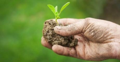 <strong>Agricoltura in Sicilia</strong>, tanti problemi e poche soluzioni proposte