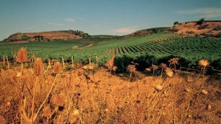 <strong>Ruralismo e neoruralismo</strong>. Agricoltura senza campagna o campagna senza agricoltura?