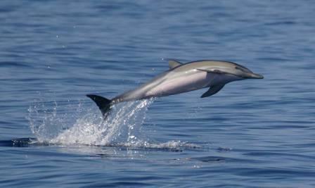 <strong>Trapani</strong>, un piccolo delfino trovato morto sulla spiaggia
