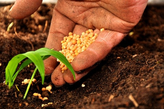 """<strong>Agricoltura</strong>: un tetto agli aiuti, più fondi a giovani e """"bio"""""""