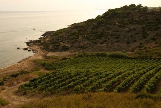 <strong>Cantine Settesoli</strong>, 2 mila soci 6 mila ettari è la via siciliana al vino