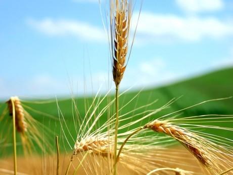 <strong>Imu su immobili agricoli</strong>: parte la richiesta di esenzione di 5 Comuni agrigentini
