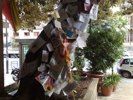 """<strong>Palermo</strong>. L'albero di Falcone """"è sacro"""", diventerà un bene culturale"""