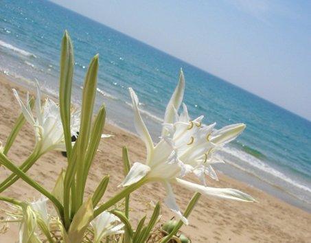 <strong>Turismo, Menfi</strong> fra le 333 migliori località balneari d'Italia