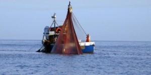 """Il Distretto della Pesca, grazie alla """"Blue Economy"""", fra i primi """"Ecodistretti 2012"""""""