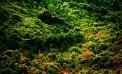 Nella <strong>macchia mediterranea</strong> nascono le erbe che guariscono