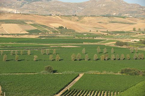 Il 2012 anno d'oro del <strong>vino siciliano</strong>