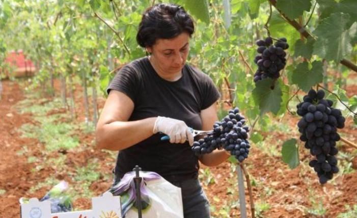 <strong>I benefici dell'uva</strong> nella dieta giornaliera