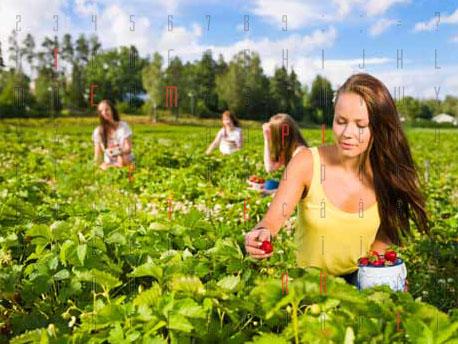 <strong>Boom di giovani agricoltori</strong>: è questa la professione del presente e del futuro
