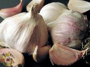 presidio_slow_food_aglio_rosso_di_nubia
