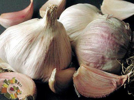 L'aglio rosso di Nubia si coltiva anche altrove
