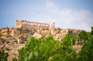 vigne_templi_sicilia