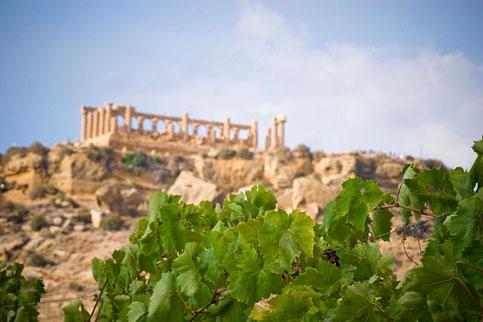 Se il vino può trainare anche il turismo
