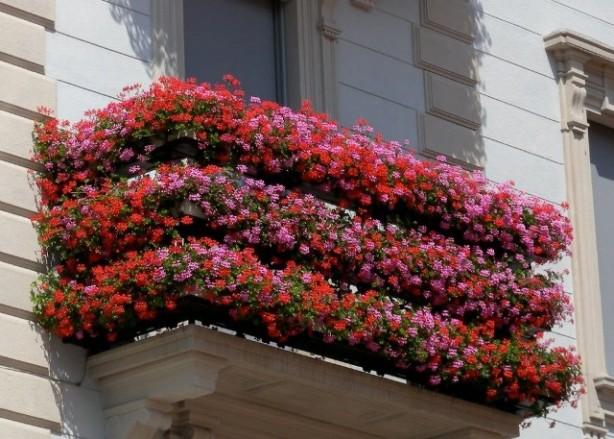 Cortili verdi, balconi in fiore: <strong>la grande bellezza di Ortigia</strong>