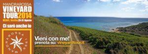 Vineyardtour_menfi