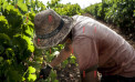 <strong>In Sicilia la vendemmia più grande d'Europa</strong>: a Menfi due giorni tra vigneti, mare e cucina contadina