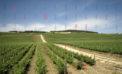Cantine Aperte al Feudo Arancio: festa del vino di qualità