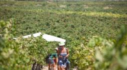 Al via Mandrarossa Vineyard Tour alla scoperta di Menfi