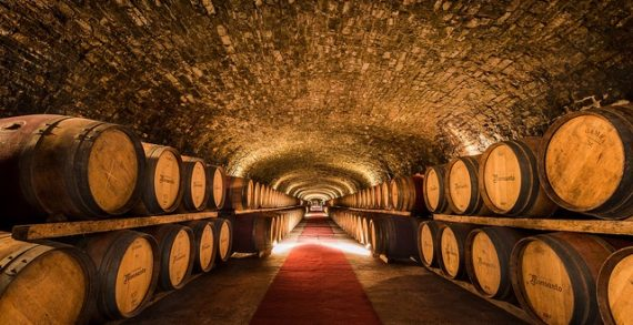 Exploit dei vini Doc Sicilia, 80 milioni di bottiglie nel 2018