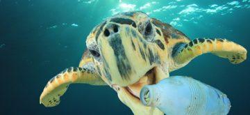 Mare e spiagge siciliani inquinati, la Regione può diventare avanguardia in Europa