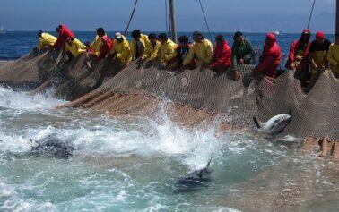Riparte la pesca del tonno