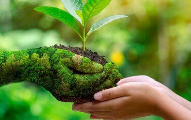 """Giornata mondiale dell'ambiente. Carlo Petrini: """"Rigeneriamo i nostri pensieri sull'economia e l'ecologia"""""""